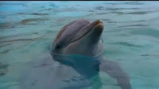Talking to Dolphins