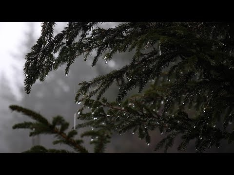 Relaxing Forest Rain Sounds for Sleeping, Relax, Study,... / 6 Hours Sounds of Rain