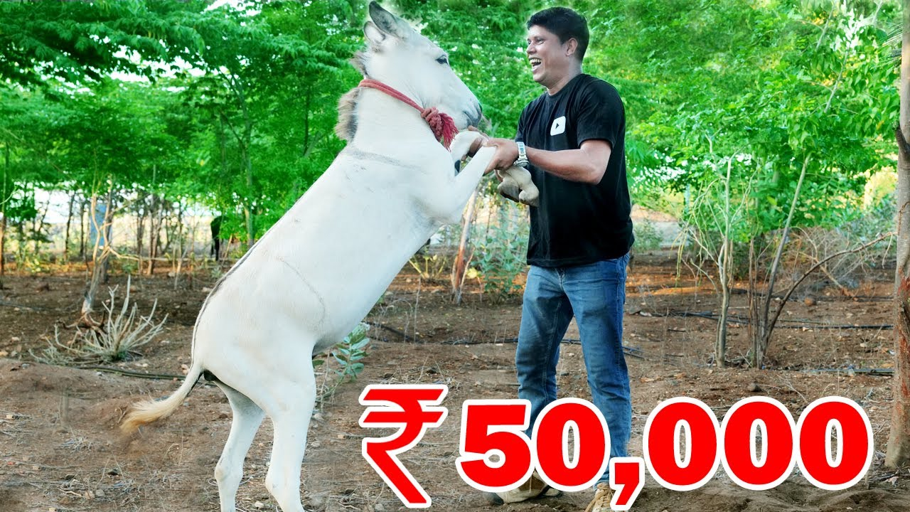 I Bought A White Donkey | ഞാൻ ഒരു വെള്ള കഴുതയെ വാങ്ങിച്ചപ്പോൾ | Village Food
