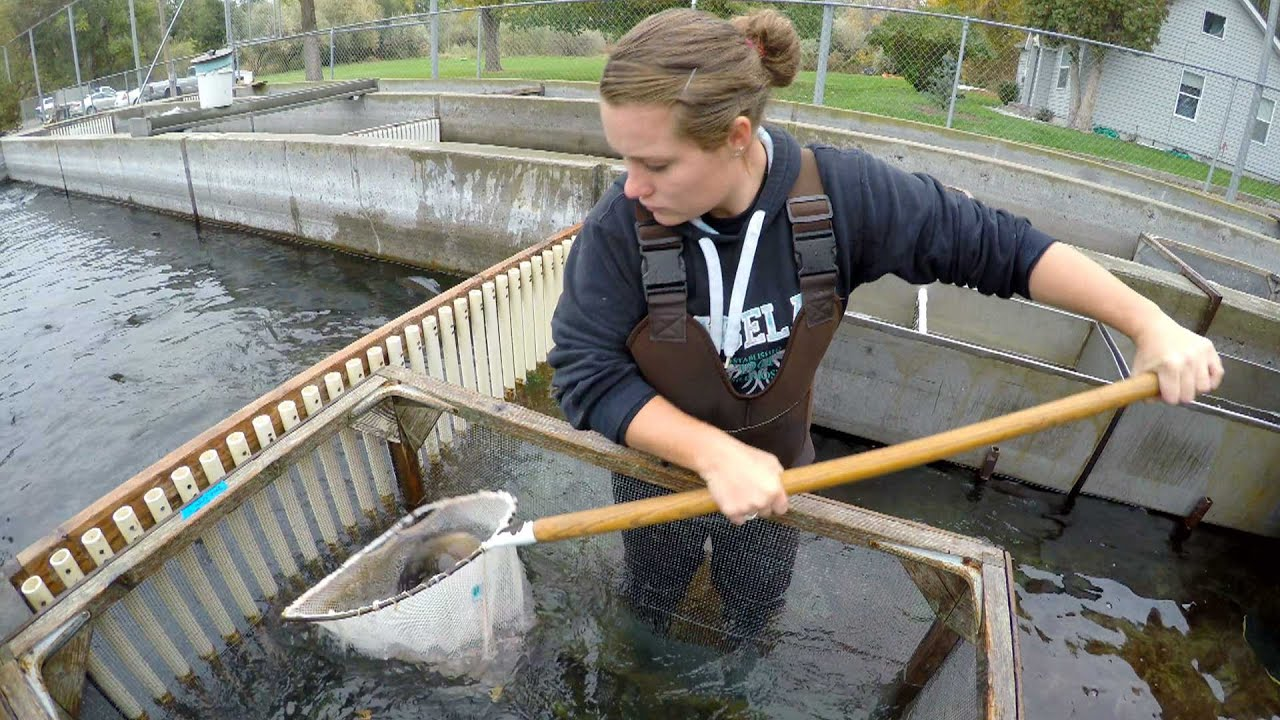 Aquaculture | Journey to Career