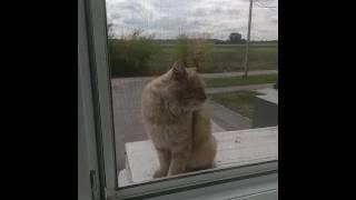 Пришел кот в офис