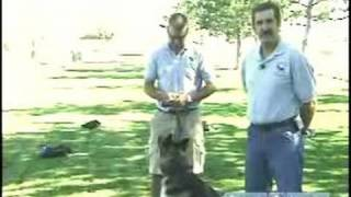 How To Train A Drug Dog : Untrained Drug Dog Demonstration
