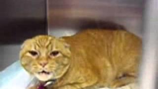 Самая яростная кошка в мире