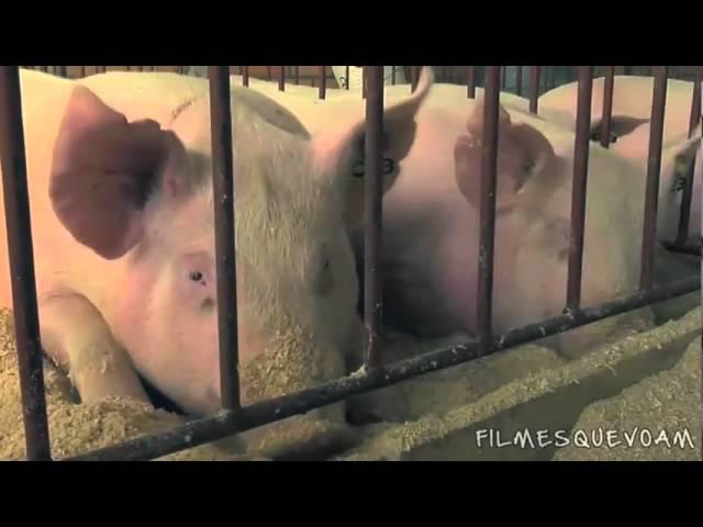 Espírito de Porco (trailer)