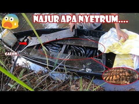 Ini Baru Najur !!! Full ikan dengan Teknik Tajur Ala Kalimantan #138