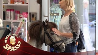 Einmal Pony schneiden, bitte! | Verstehen Sie Spaß?