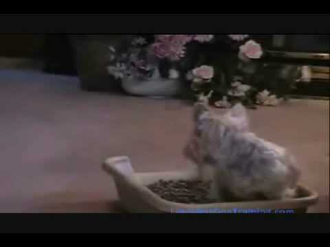 how to train a dog to use the litter box