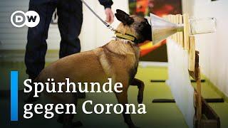 Finnland setzt beim Coronatest auf Spürhunde | Fokus Europe
