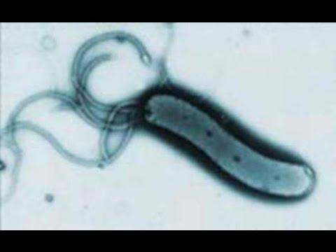 скачать симулятор бактерии - фото 5