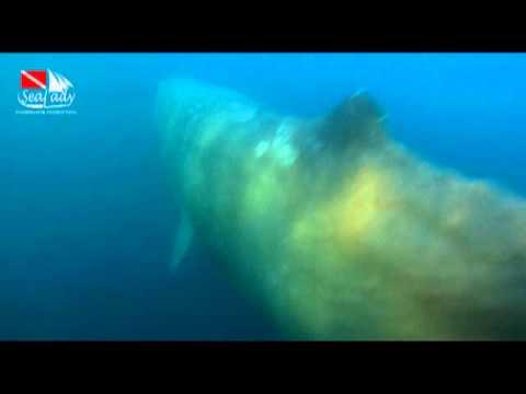 Whales.Treasures Of Indonesia. Alor. SEA LADY safari boat