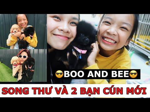 SongThưVlog: GIỚI THIỆU 2 THÀNH VIÊN MỚI CỦA GIA ĐÌNH SONG THƯ- BOO AND BEE/ SONG THƯ CHANNEL