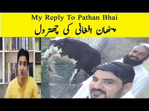 Reply To Pathan Bhai | REPLY FROM Abid Khan | My Reply To Afghan Bhaijaan Pathan Bhai | Part 1