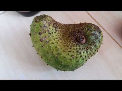 Soursop Aids In The Treatment Of Hypertension- Health Benefits Of Soursop