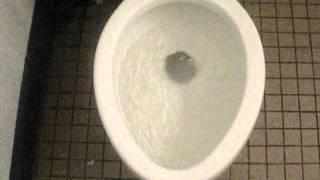 501: 'BOLTON' Toilet By Kohler