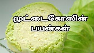 முட்டைகோஸின் பயன்கள்  | Cabbage Uses in Tamil