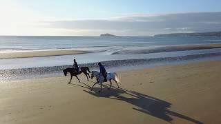 Horses At Sunrise - Portmarnock Beach (Drone Footage)