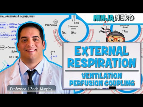 Respiratory | External Respiration: Ventilation Perfusion Coupling | Part 1