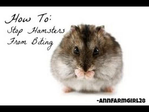 how to stop your dwarf hamster from biting
