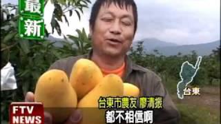 「四季芒果」 品嚐鮮甜不分季節-民視新聞