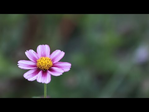 1 Hour of Relaxing Music with Beautiful Pics of Nature - Meditation, Study, Sleep, Zen.