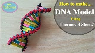 How to Make a DNA model using Thermocol