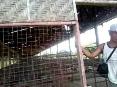 Arnold's Piggery Ubay, Bohol Phil....
