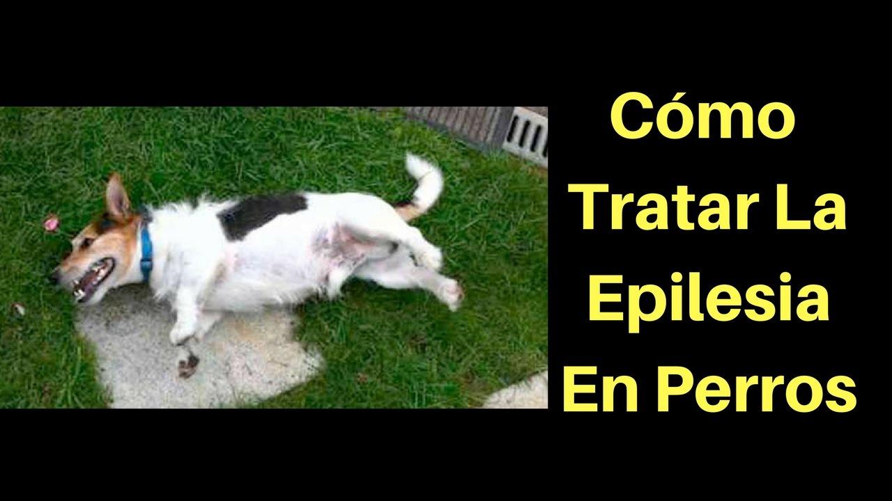 que hacer en un ataque de epilepsia canina