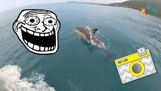 Дельфины Абхазия