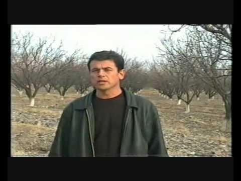 Tajik Fruit Project video Play it Forward