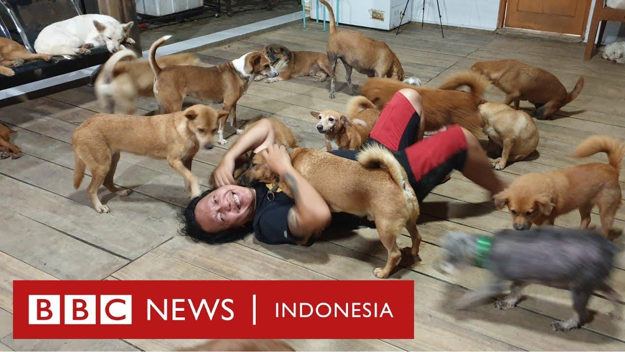 Relawan menyelamatkan hewan yang ditinggal pemiliknya yang terpapar Covid-19 - BBC News Indonesia