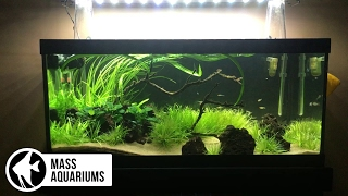 Intro to High Tech Planted Aquariums. Beginners Guide: Part 1