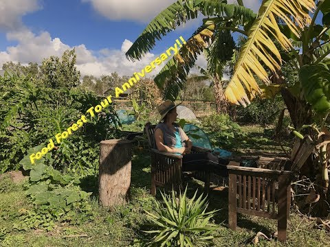 Two Years Old Organic Subtropical Food Forest October 2017 Garden Tour