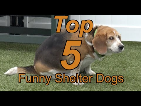 Top 5 Funny Shelter Dogs at Northeast Animal Shelter