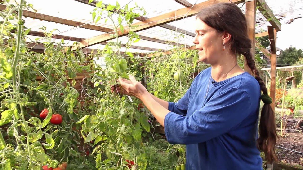 Tomaten Gewächshaus transparent Treibhaus Tomatenhaus Folienzelt 200x150x77