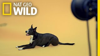 See How Our Photographers Captured the Pets of Nat Geo   Nat Geo Wild