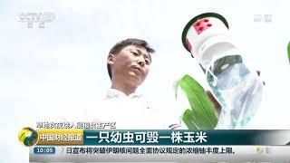 [中国财经报道]草地贪夜蛾入侵粮食主产区 一只幼虫可毁一株玉米| CCTV财经
