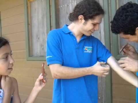 Picadura de hormiga bala (Paraponera clavata)