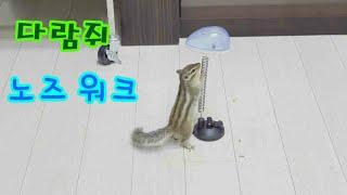 청설모 설이의 수건 목욕과 귀여운동물 손다람쥐 향단이의…