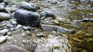 2013年3月31日 坂本川