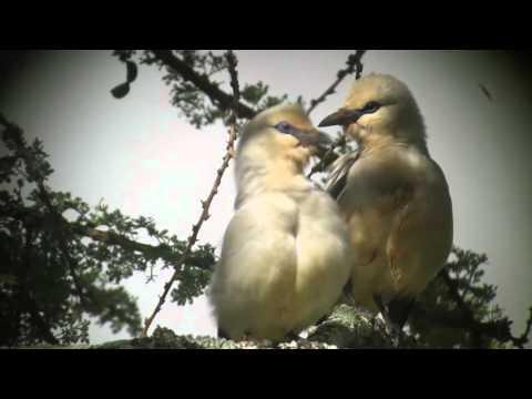 Birding tour in Ethiopia 2015