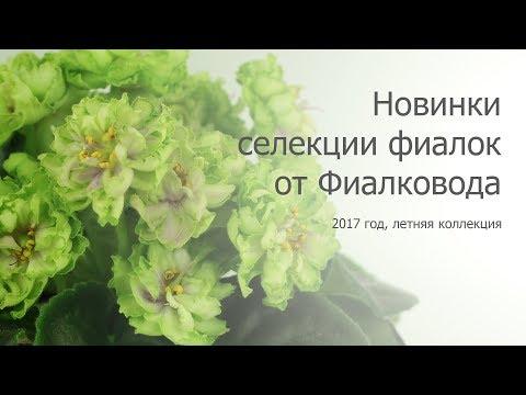 Красивейшие фиалки-новинки от Фиалковода - летняя коллекция 2017 года