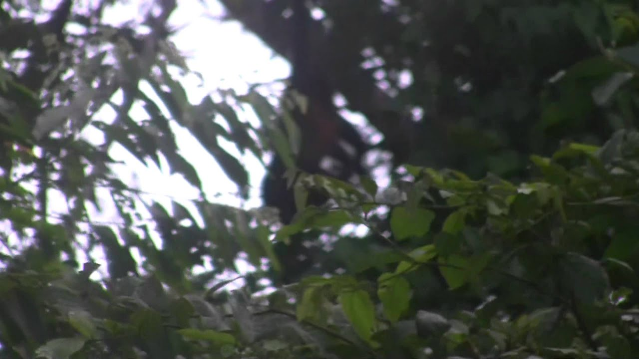 monkey hanging by tail five youtube