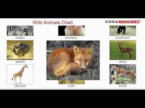 Wild Animals Chart - YouTube