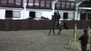 Loopy Luna 8 year old mare Luxius x Weinberg