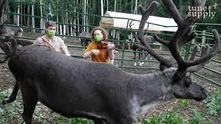 Tunes for Reindeer @ Running Reindeer Ranch || Virtual Concert || Traditional Irish Music 2021