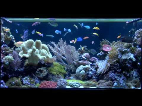 Custom Coral Reef Aquarium Okeanos Aquascaping Youtube
