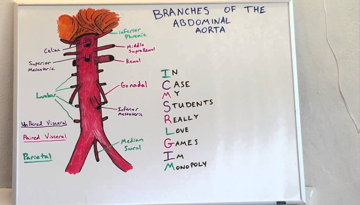 Branches Of Abdominal Aorta Anatomy Lecture For Medical Students