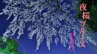 夜桜ブルース / 長山洋子 Cover:山口えい子