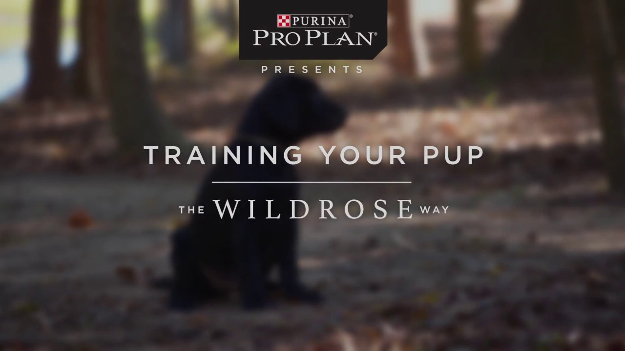 Purina Puppy Training with Wildrose