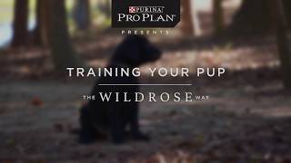 Introduction to: Starting Your Puppy, The Wildrose Way